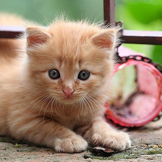 حكم بيع القطط موقع الشيخ علي آل محسن
